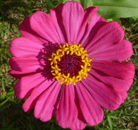 honiara_flower1