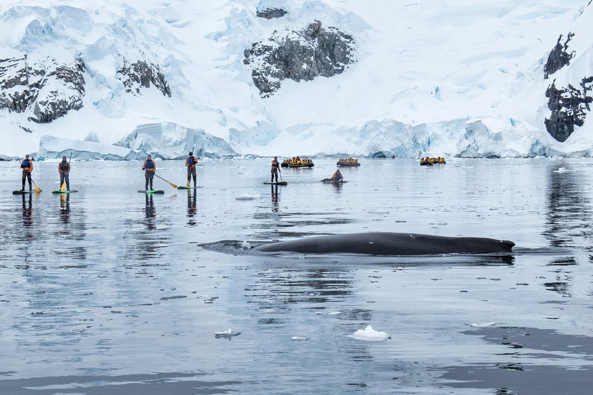 Possible activity on Antarctica Eclipse Cruise 2020 paddleboard with whales